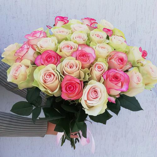 біло-рожеві троянди фото